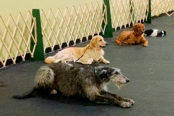 Pet Friendly Murfreesboro Obedience Training Club