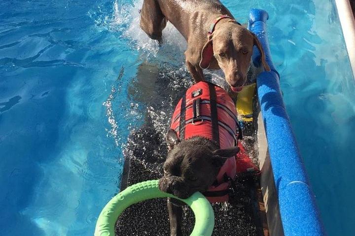Pet Friendly TRANQUIL PET, Dog Swims & Holistic Pet Care