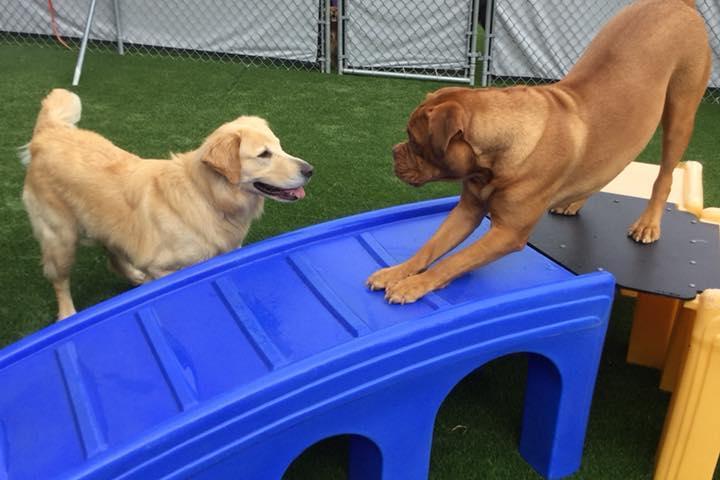 Pet Friendly the Crate Escape