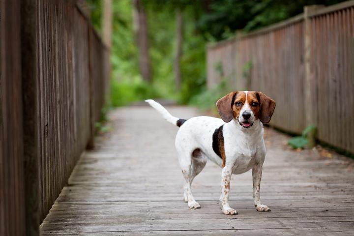 Pet Friendly Unleashed Pet Photography