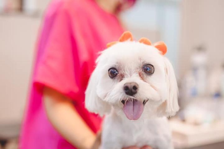 Pet Friendly Posh Paws Grooming