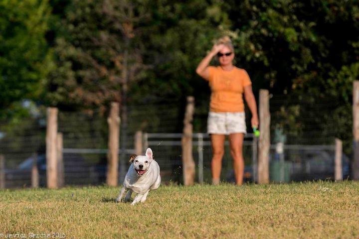 Pet Friendly Sea Paws Dog Resort