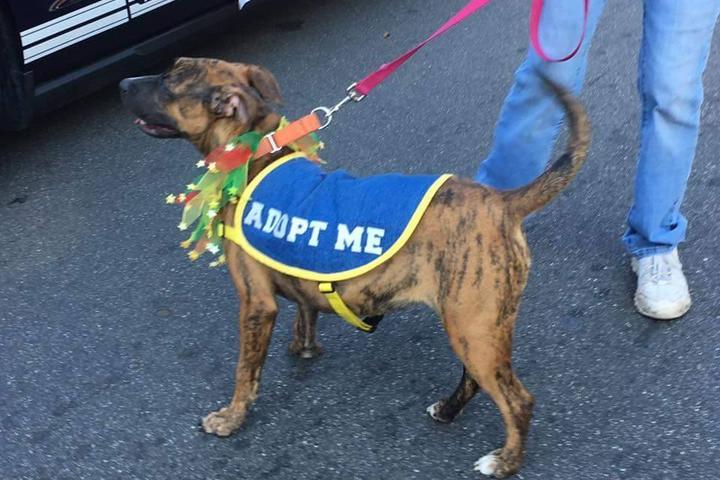 Pet Friendly Humane Society of Lake County