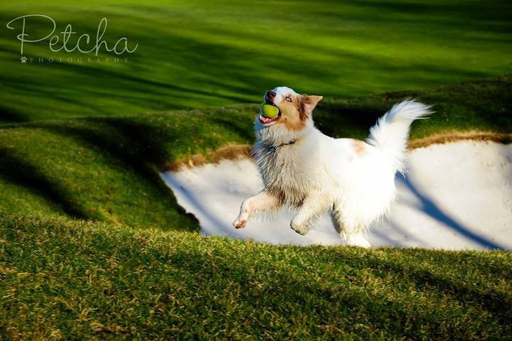 Pet Friendly Petcha Photography