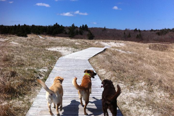 Pet Friendly Sirius Dog Walking