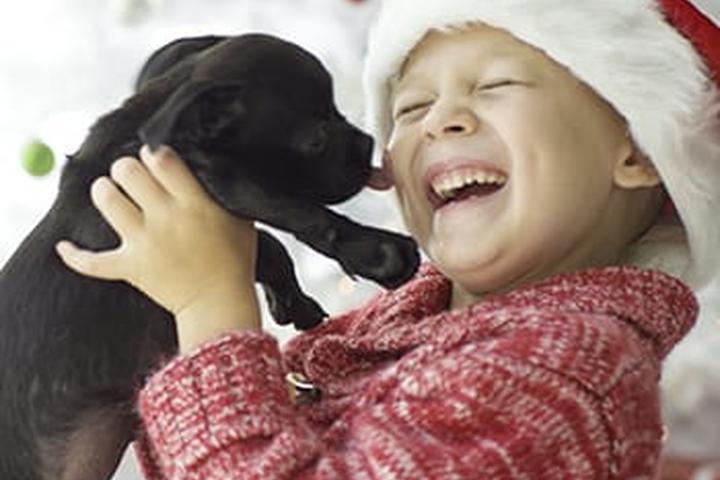Pet Friendly Lake Wales Veterinary Hospital
