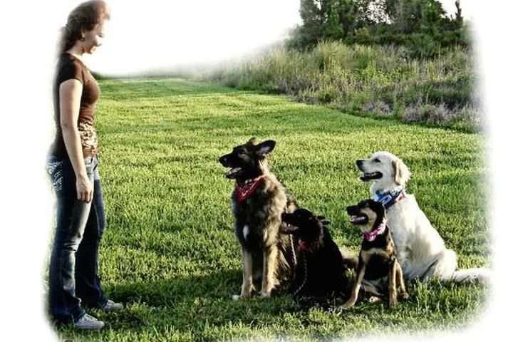 Pet Friendly Lexi Hayden's Fine-Tuned Canines