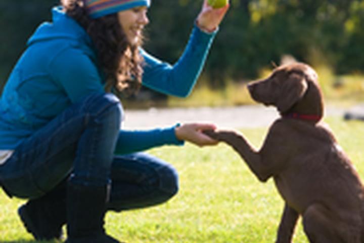 Pet Friendly Gwinnett Pet Watchers