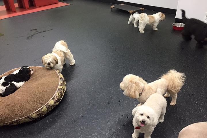 Pet Friendly Pups @ Play