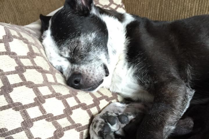 Pet Friendly Menlys Pet Care