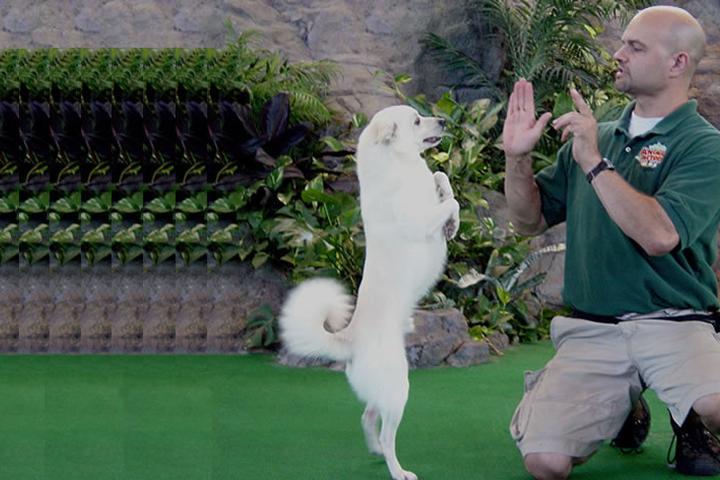 Pet Friendly Model Behavior