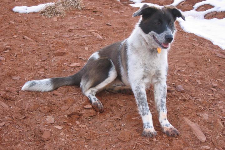 Pet Friendly Paws N' Go Dog Walking & Pet Sitting