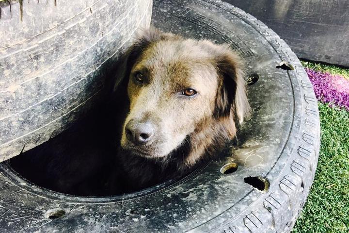 Pet Friendly Tega K9 Dog Daycare & Training