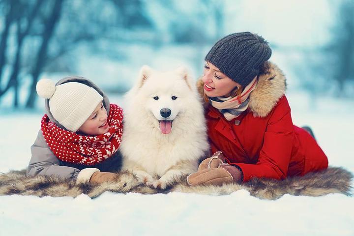 Pet Friendly PawsPlus, Inc.