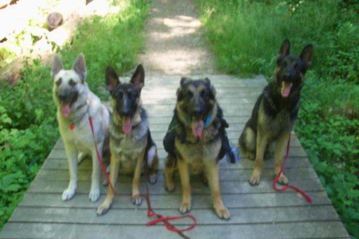 Pet Friendly K9 Behavioral Specialist