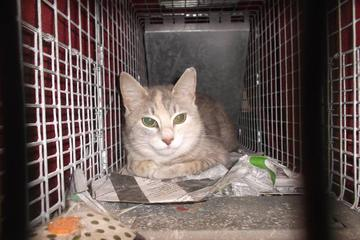 Pet Friendly Spay Neuter Clinic of the Carolinas