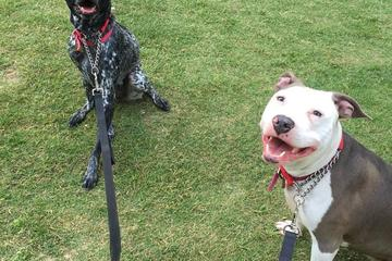 Pet Friendly Leashes and Litterboxes