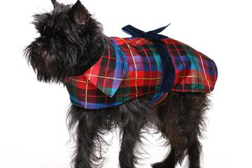 Pet Friendly Dixie Dog Wear