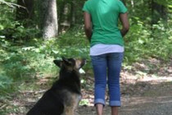 Pet Friendly Waggin' & Walking