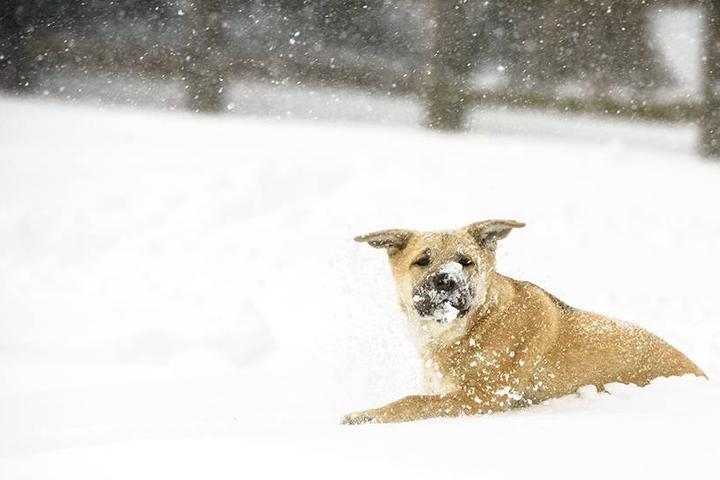 Pet Friendly fatdogfoto