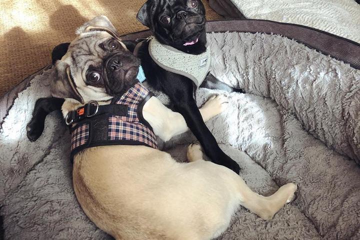 Pet Friendly Fluffy & Fido Pet Care
