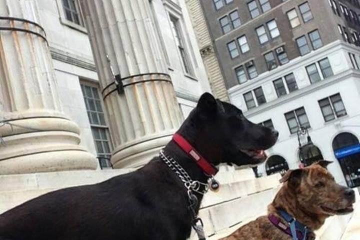 Pet Friendly Paws & Pals Dog Walkers