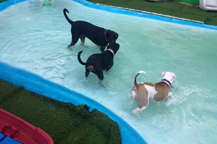 Pet Friendly AKZ Rockin' Pet Resort & Spa