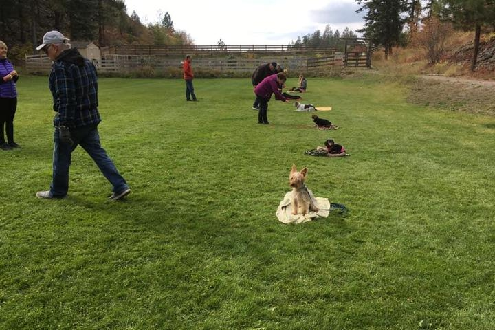 Pet Friendly Chasing Tails Dog Obedience Training