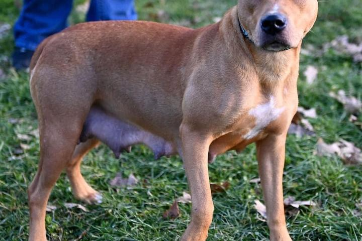 Pet Friendly Athens County Dog Shelter