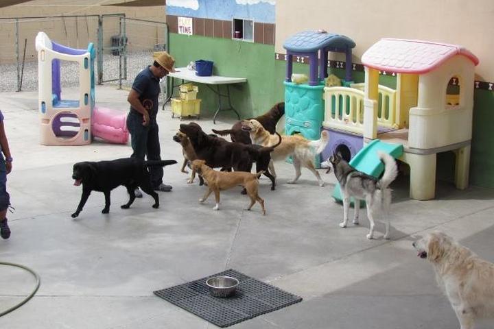 Pet Friendly Ciudad Canina