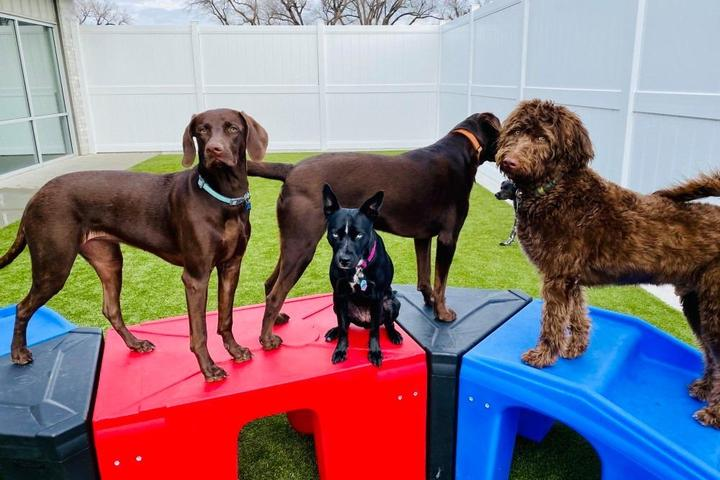 Pet Friendly Woof's Play & Stay
