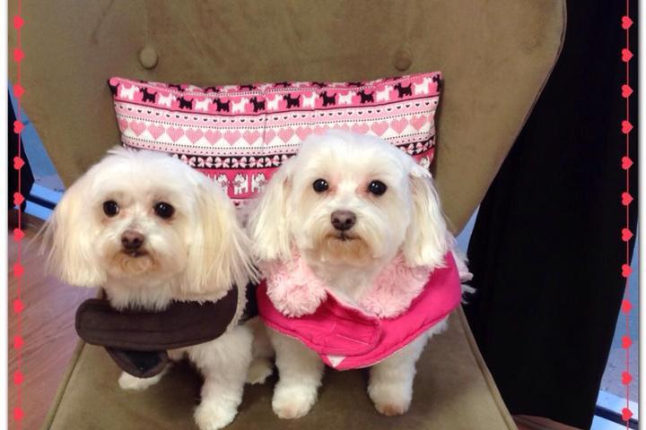 Pet Friendly Bloomingtails Pet Spa