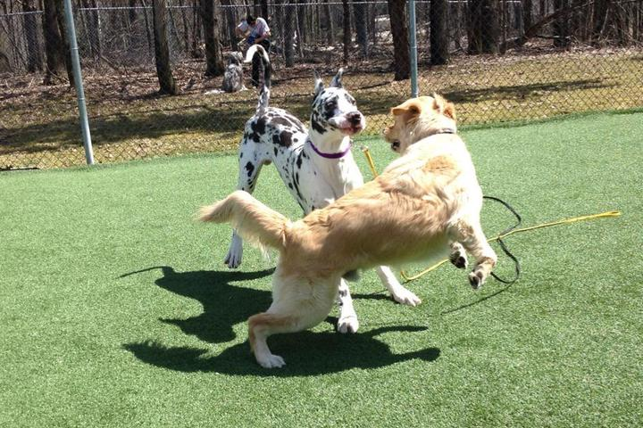 Pet Friendly Sandy Hills Kennels