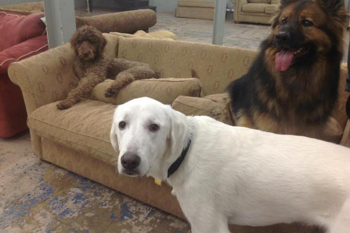 Pet Friendly Our Friends Den