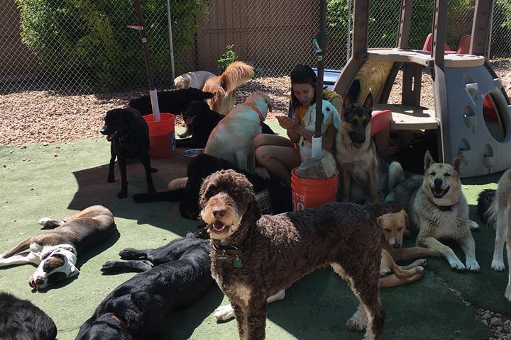 Pet Friendly City Bark Parker