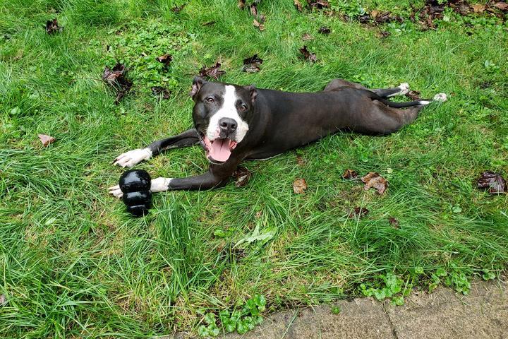 Pet Friendly Tranquil Trails Pet Care