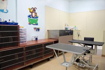 Pet Friendly Boca Veterinary Clinic