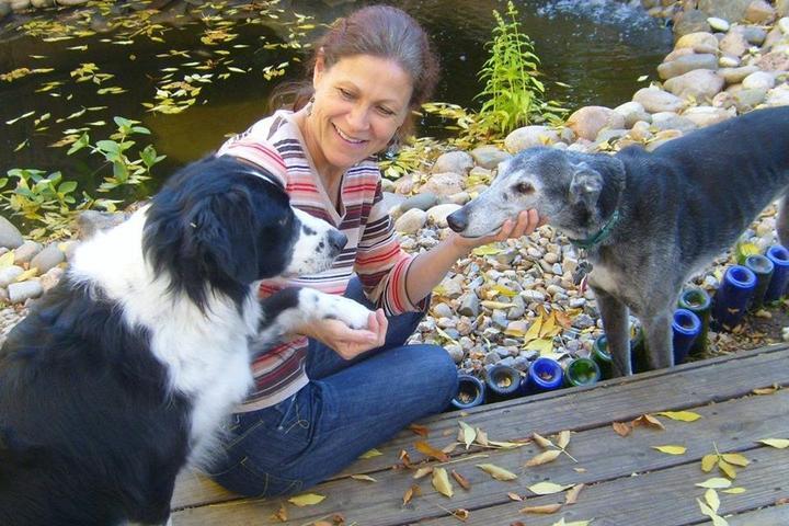 Pet Friendly KK9 Dog Training