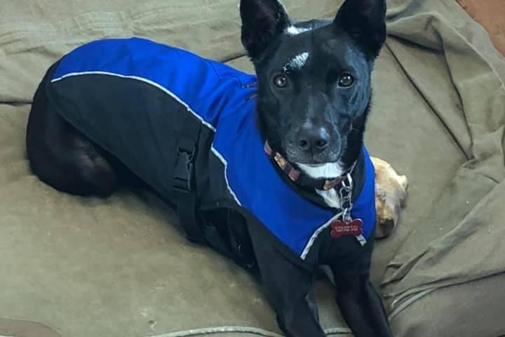 Pet Friendly Star Dog Training