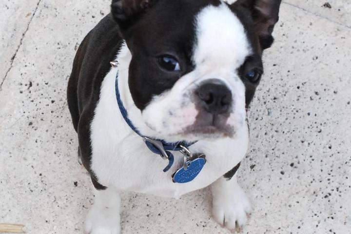 Pet Friendly Playful Paws Miami