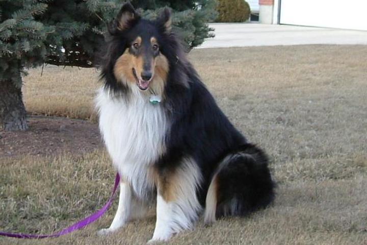 Pet Friendly Michigan Dog Guard