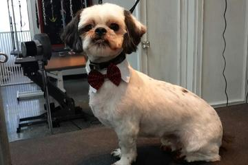 Pet Friendly Coiffed & Collared Hair and Fur Studio