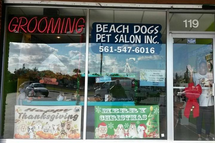 Pet Friendly Beach Dog Pet Salon