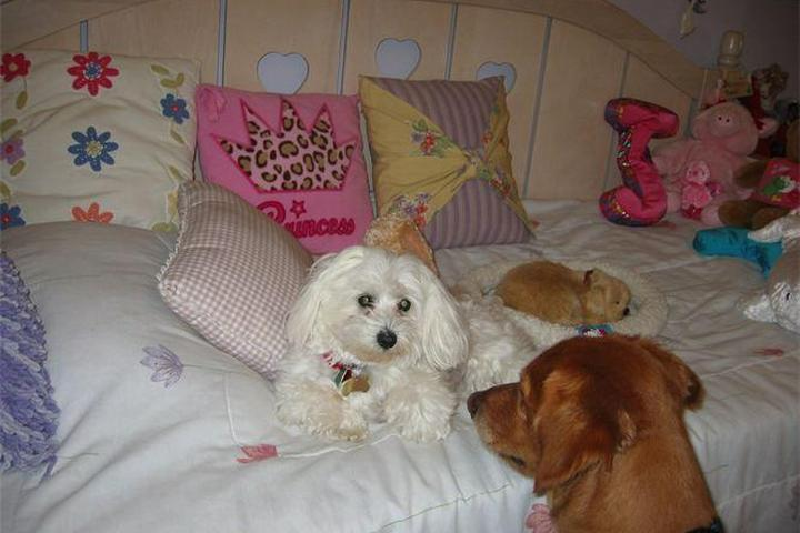 Pet Friendly Loving Touch Pet Sitting Service
