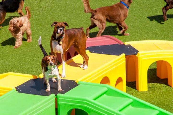 Pet Friendly K9 Resorts