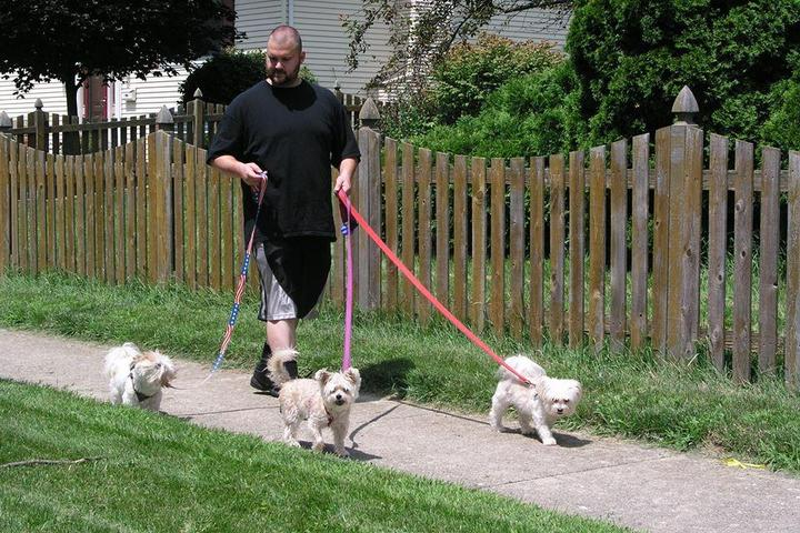 Pet Friendly Snaggle Foot Dog Walks and Pet Care