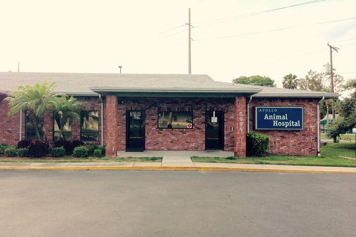 Pet Friendly Apollo Beach Animal Hospital
