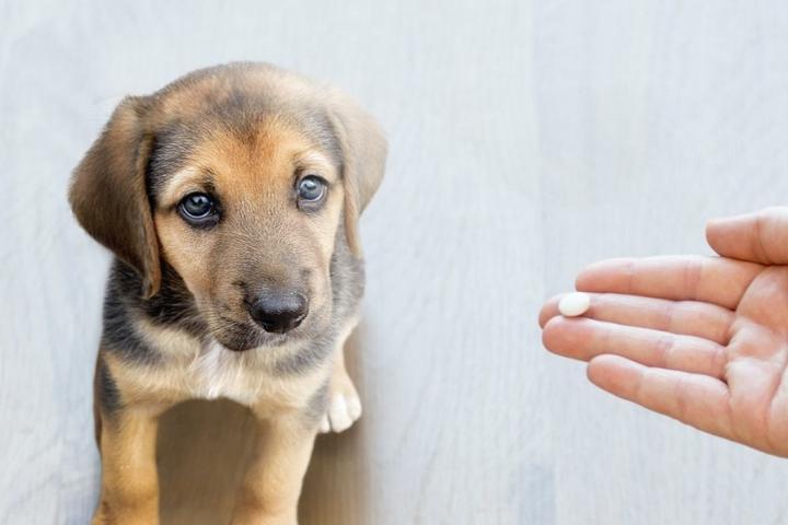 Pet Friendly Elements Compounding Pharmacy