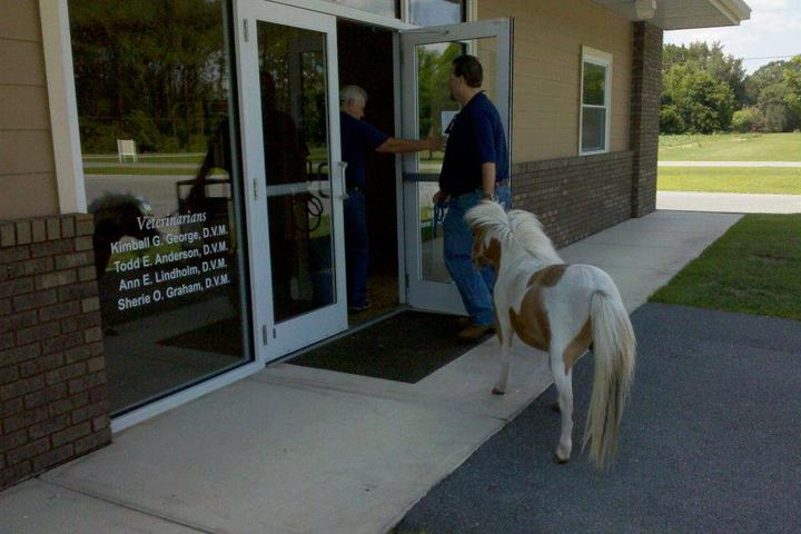 Pet Friendly Panhandle Veterinary Services