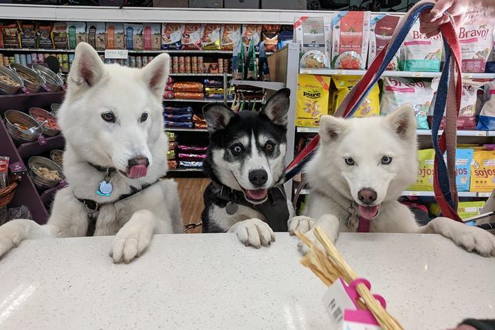 Pet Friendly All the Best Pet Care